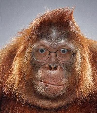 eyeglasses-on-ape