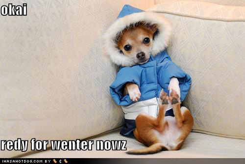 funny-dog-pictures-okai-redy-for-wenter-nowz
