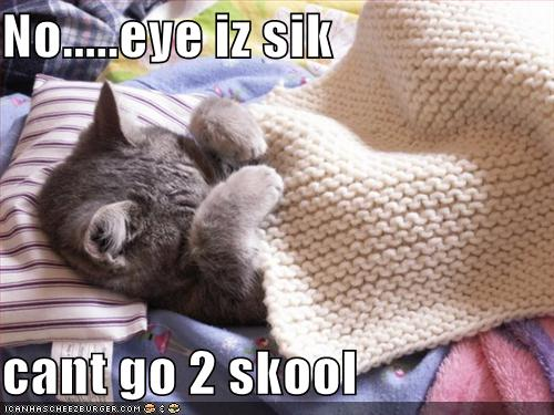 funny-pictures-cat-is-sick-and-cannot-go-to-school