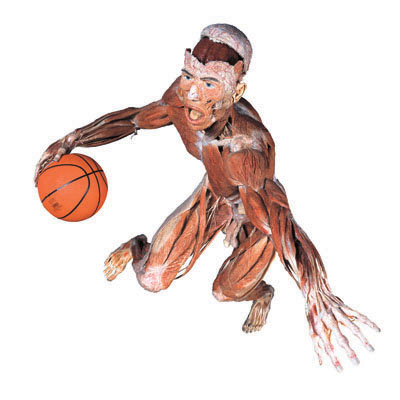 BodyWorlds-basketball.coolcanucks.ca