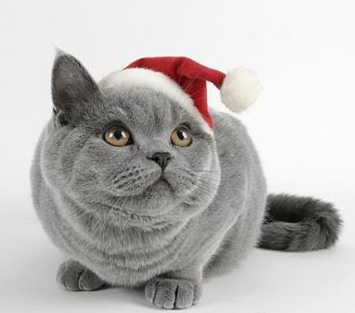 christmas-funny-cat